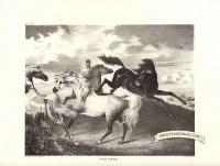 Wild horses - Small fox mark near edge of image