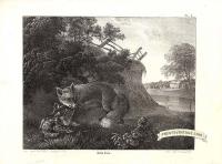 Quails or Partridges - Small fox mark near quail's head