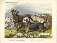 Bedlington Terrier and Dandie Dinmont Terrier - Geordie and Doct