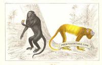 Royal Howler and Golden-tailed Howler Monkeys