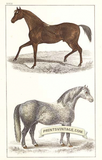 Race Horse and Cart Horse