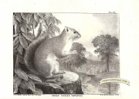 Grey Squirrel - Some text offsetting