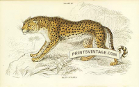The Hunting Leopard