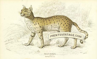 Servaline Cat