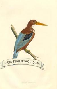 Smyrna Kingfisher